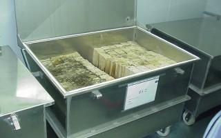 Laboratoire -  bac élevage termites