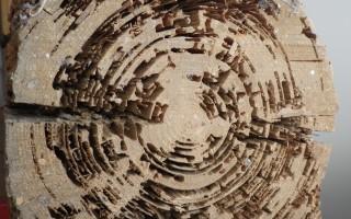 dégât termites 5