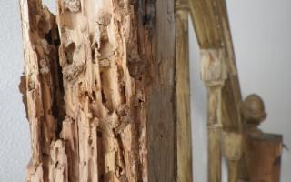 dégât termites 8