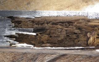 dégâts termites 2